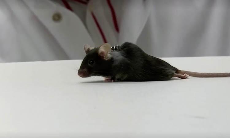 still-raton-163648